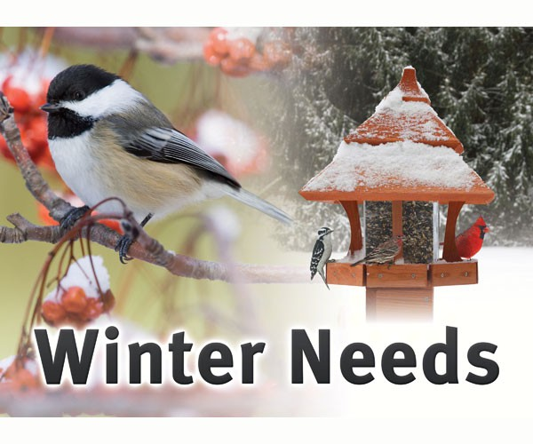 Wild Bird Winter Needs