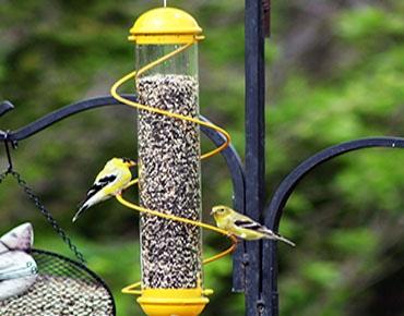 tube style bird feeder