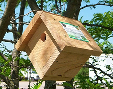 bird house for wrens or chickadees