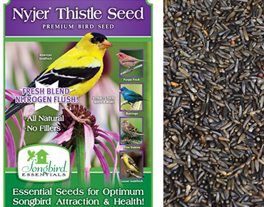 Nyger Thistle Seed