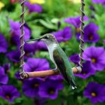 Female ruby-throated hummingbird on a copper hummingbird swing by Songbied Essentials.